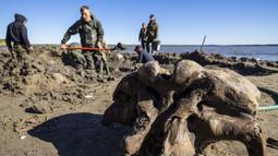 Sejumlah orang mencari tulang mammoth di Danau Pechevalavato, Yamalo-Nenets, Rusia, Rabu (22/7/2020). Para penggembala rusa lokal menemukan fragmen kerangka mammoth di Danau Pechevalavato. (Artem Cheremisov/Governor of Yamalo-Nenets region of Russia Press Office via AP)