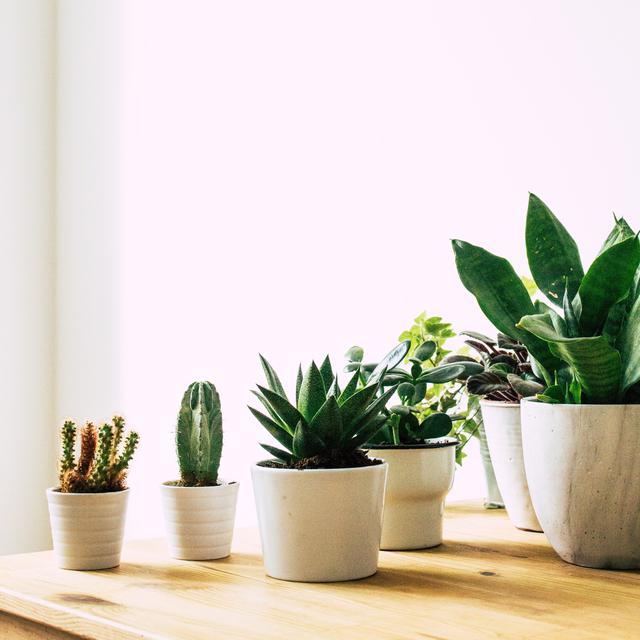 6 Tanaman Hias Yang Bisa Menghilangkan Racun Berbahaya Di Rumah Hot Liputan6 Com
