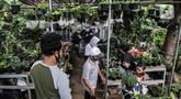 Pedagang melayani calon pembeli tanaman hias di kawasan Cipayung, Depok, Jawa Barat, Minggu (27/9/2020). Meningkatnya hobi masyarakat dalam berkebun di rumah semenjak PSBB diterapkan menyebabkan harga tanaman hias moroket hingga 10 kali lipat. (merdeka.com/Iqbal S. Nugroho)