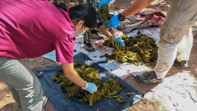 Gambar yang dirilis pada 26 November 2019 memperlihatkan dokter hewan memeriksa sampah yang ditemukan dari perut rusa mati di Taman Nasional Khun Sathan, Thailand. Rusa jantan yang memiliki tinggi 135 sentimeter itu diperkirakan berumur lebih dari 10 tahun (HO/Office of Protected Area Region 13/AFP)