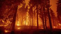 Dalam foto eksposur panjang ini menunjukkan Caldor Fire membakar pepohonan di Mormon Emigrant Trail sebelah timur Sly Park, California, Amerika Serikat, Selasa (17/8/2021). Kebakaran hutan mengancam untuk menyebarkan ke beberapa wilayah di California utara. (AP Photo/Ethan Swope)