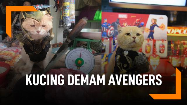 Cho, Si Kucing Lucu Cosplayer Pahlawan Super Avengers