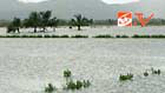 Ratusan tambak ikan milik warga terendam banjir akibat hujan deras yang terus mengguyur di Konawe, Sulawesi Tenggara. Akibatnya petani merugi hingga ratusan juta rupiah.