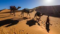 Ilustrasi barisan unta yang sedang berjalan di gurun pasir. (dok. Unsplash/ Sergey Pesterev)