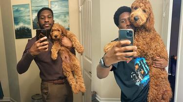 Pertumbuhan Anjing 'Dulu vs Sekarang'.