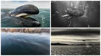 Potret mamalia laut. (My Modern Met)