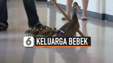 thumbnail tradisi bebek di prairie mountain school