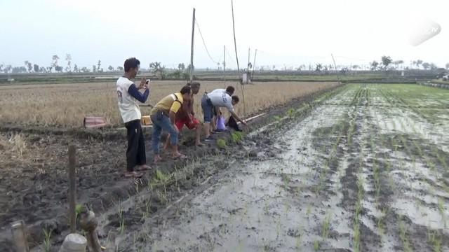 Seorang petani tewas tersetrum jebakan tikus listrik yang dipasang di sawah. Setelah kejadian ini, tercatat tujuh orang tewas akibat jebakan tikus tersebut.