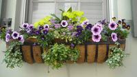 Window garden merupakan tanaman yang diletakkan pada kotak di luar jendela. Anda pun bisa menanam berbagai jenis tanaman.