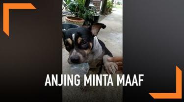 Seekor anjing di Thailand menunjukkan muka bersalah dan 'meminta maaf' kepada pemiliknya setelah berenang di kolam lumpur.