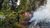 Kebakaran hutan Gunung Petarangan, Batur, Dataran Tinggi Dieng, Banjarnegara, Jawa Tengah. (Foto: Liputan6.com/SRU RAPI BNA/Muhamad Ridlo).