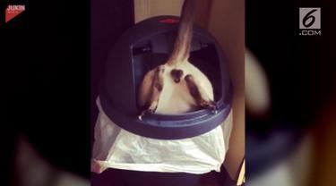 Aksi seekor kucing himalayan yang berusaha keluar karena terjerembab di tong sampah.
