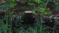 Tapal batas kawasan hutan dengan tanah milik warga desa di Cikuya, Bantarsari, Wanareja, Cilacap. (Foto: Liputan6.com/Muhamad Ridlo)