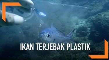 Seekor ikan kecil di laut Phuket terkena dampak bahaya dari sampah. Ikan itu terjebak di dalam kantong plastik.