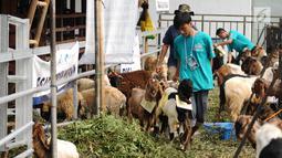 Petugas membawa hewan kurban di Lapangan Masjid Al Azhar, Jakarta, Jumat (1/9). Masjid Al Azhar Jakarta memotong dan mendistribusikan ratusan hewan kurban pada Hari Raya Idul Adha 1438 H. (Liputan6.com/Helmi Fithriansyah)