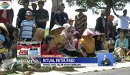 Sebagai rasa syukur atas panen berlimpah, warga Ponorogo, Jawa Timur, menggelar kirab ratusan tumpeng di pematang sawah.