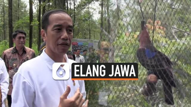 Presiden Joko Widodo atau Jokowi mengunjungi Taman Nasional Gunung Merapi Jurang Jero, Kabupaten Magelang, Provinsi Jawa Tengah, Jumat (14/2/2020). Dalam kesempatan itu, Jokowi juga melepasliarkan sepasang elang Jawa.