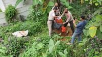 Polsek Sawangan saat melakukan pembongkaran kuburan babi ngepet di wilayah Kelurahan Bedahan, Kecamatan Sawangan, Kota Depok (Liputan6.com/Dicky Agung Prihanto)