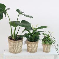 plant/pixabay