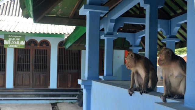 Legenda Santri Nakal Dikutuk Jadi Kera Di Masjid Saka Tunggal
