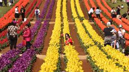Pengunjung berada di antara bunga tulip selama Tesselaar Tulip Festival di Silvan, Dandenong Ranges, Melbourne (27/9). Pengunjung antusias melihat lebih dari satu juta warna-warni bunga, termasuk 900.000 tulip. (AFP Photo/William West)