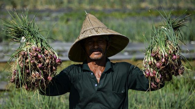 Seorang petani menunjukkan bawang saat panen di sebuah peternakan di Pekan Bada, dekat Banda Aceh (22/1/2020). Petani di daerah itu menyatakan panen bawang saat ini menguntungkan petani karena bersamaan dengan naiknya harga komoditas tersebut. (AFP Photo/Chaideer Mahyuddin)