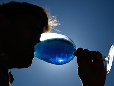 Gik, Anggur Biru dari Spanyol