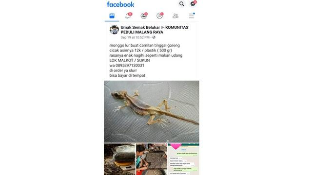 Viral Pria Penjual Cicak Asin Goreng, Proses Pembuatannya Bikin Bergidik (sumber: twitter.com/m_ribhi)
