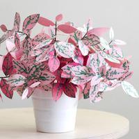 Kamu ingin memelihara tanaman tapi nggak ingin rumahmu kotor? Yuk, bikin tanaman dari kertas.
