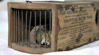 Sebuah jebakan tikus yang menjadi pajangan museum terbukti ampuh menangkap tikus.