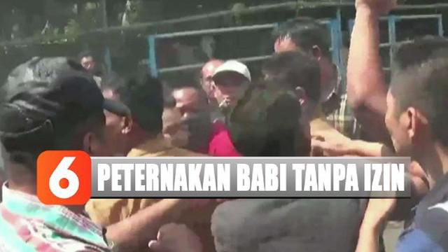 Sejumlah warga dan karyawan peternakan babi mengusir tim gabungan pada saat petugas hendak melakukan evakuasi babi yang ada di dalam kandang.
