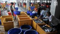 Pedagang menyortir ikan di Pasar Ikan Modern (PIM) Muara Baru, Jakarta, Kamis (21/2). PIM Muara Baru memiliki berbagai fasilitas. (Merdeka.com/Iqbal Nugroho)