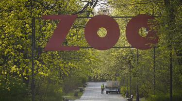 Pekerja terlihat di Kebun Binatang Warsawa di Warsawa, Polandia (16/4/2020). Kebun binatang tersebut berada di bawah tekanan keuangan setelah pemerintah memutuskan untuk menutup semua tempat hiburan, restoran dan tempat umum lainnya guna mengendalikan penyebaran coronavirus. (Xinhua/Jaap Arriens)