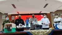 Polda sumbar merilis penangkapan pelaku yang terlibat jual beli satwa langka di Kabupaten Solok. (Liputan6.com/ Novia Harlina)