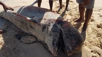 Foto: Warga Sabu Raijua, NTT saat mengevakuasi paus biru yang mati terdampar (Liputan6.com/Ola Keda)