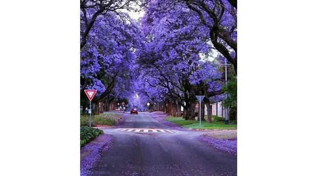 Potret 7 Pohon Ini Indah Sekali, Seperti Berada di Taman Impian