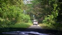 Hutan Nusakambangan. Foto: (Muhammad Ridlo/Liputan6.com)