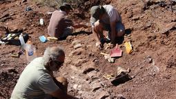 Gambar yang dirilis pada 20 Januari 2021 menunjukkan ahli paleontologi selama penggalian fosil yang ditemukan di barat daya Argentina.  Fosil tulang belulang tersebut diperkirakan berusia 98 juta tahun yang bagian-bagiannya saja seukuran manusia. (JOSE LUIS CARBALLIDO/CTyS-UNLaM/AFP)