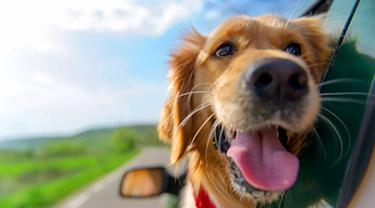 Ilustrasi anjing