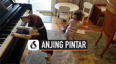 Seekor anjing bernama Buddy Mercury mendadak viral di media sosial. Anjing ini mampu memainkan piano dan bernyanyi. Saat memainkan piano, bocah cilik perempuan ikut berjoget disampingnya.
