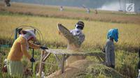Petani memisahkan gabah saat panen padi di sawah Desa Bube Baru, Kecamatan Suwawa, Kabupaten Bone Bolango, Gorontalo (15/3). Mereka lebih memilih menggunakan tenaga manusia agar Kebersamaan mereka terhaga. (Liputan6.com/Arfandi Ibrahim)
