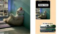 Foto profil kucing depresi bikin skripsi mahasiswa di-acc. (Twitter/@collegemenfess)