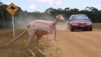 Di Australia, Volvo kembangkan teknologi yang mencegah mobil menabrak kanguru.