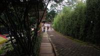Memberi makna pada rumpun bambu yang sesungguhnya pemandangan biasa di dusun-dusun. (foto: Liputan6.com/edhie prayitno ige)