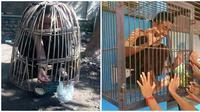 Kelakuan Kocak Orang Saat di Kandang Hewan Ini Bikin Tepuk Jidat (sumber: Instagram/awreceh.id)