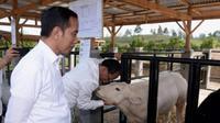Presiden Joko Widodo dan Ibu Negara melakukan kunjungan ke Desa Parsingguran, Kecamatan Pollung, Kabupaten Humbang Hasundutan guna meninjau pengembangan peternakan dan pertanian, Rabu (31/7/2019).