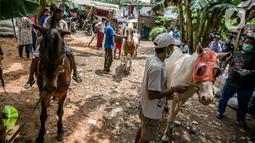 Sejumlah kuda delman saat akan diperiksa oleh dokter hewan KPKP di Jakarta, Kamis (4/2/2021). Kegiatan ini juga guna menjaga kesehatan kuda delman yang tidak beroperasi saat PSBB Jakarta yang diberlakukan untuk memutus penyebaran pandemi COVID-19. (Liputan6.com/Faizal Fanani)