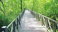 Wisata Mangrove Tanjung Penajam Paser Utara, Kalimantan Timur. (dok. Instagram @hasrianmulya/https://www.instagram.com/p/BnLaI7xgUY6/)