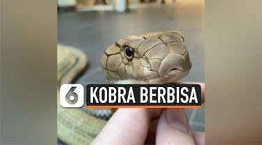 kobra berbisa