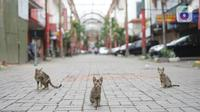 Tiga kucing terlihat di kawasan Pasar Baru, Jakarta Pusat, Senin (4/5/2020). Adanya program PSBB menyebabkan hampir seluruh pertokoan di salah satu pusat tekstil Ibukota tersebut berhenti beroperasi dan lebih sepi dibanding hari biasa. (Liputan6.com/Immanuel Antonius)